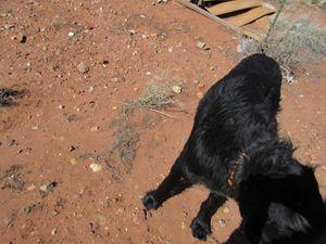 Giant Dog #2 - My Evil Twin