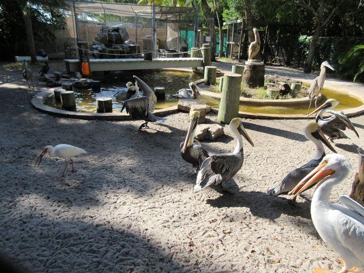 Pelicans & Egrets - My Evil Twin