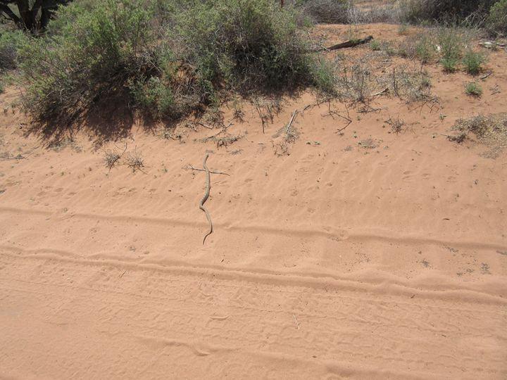 A Desert Snake - My Evil Twin