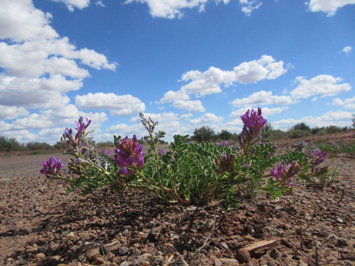 Purple Desert Flowers - My Evil Twin