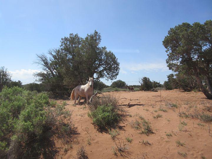 Desert Horse - My Evil Twin