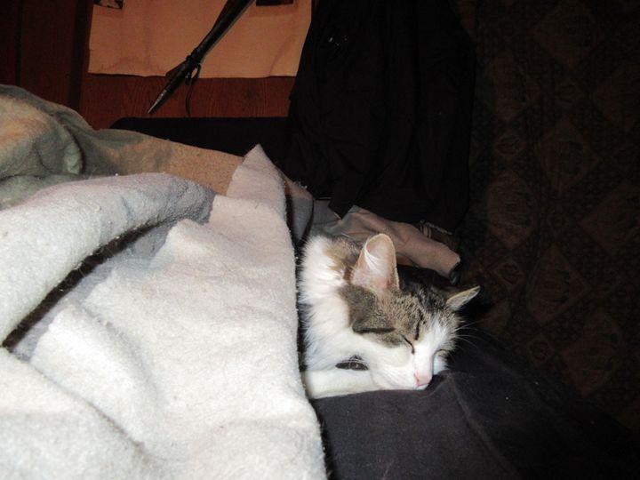 Sleeping Cat - My Evil Twin