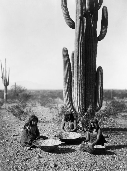 Sagauro Cactus And Gatherers - My Evil Twin