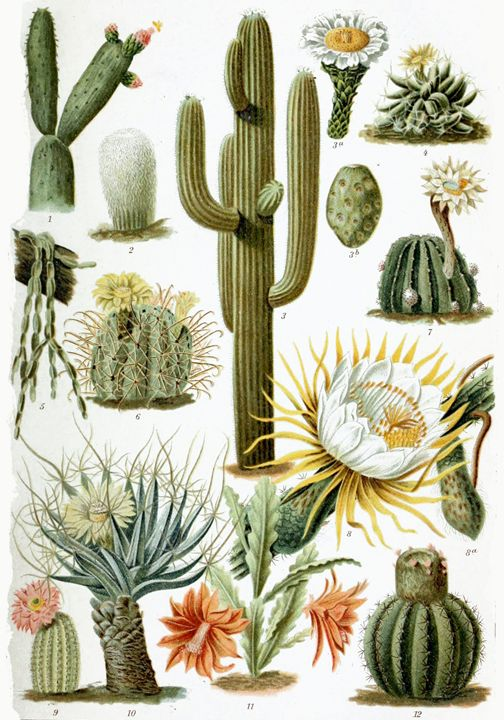Cactus Poster - My Evil Twin