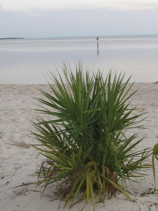 Beach Palmetto - My Evil Twin