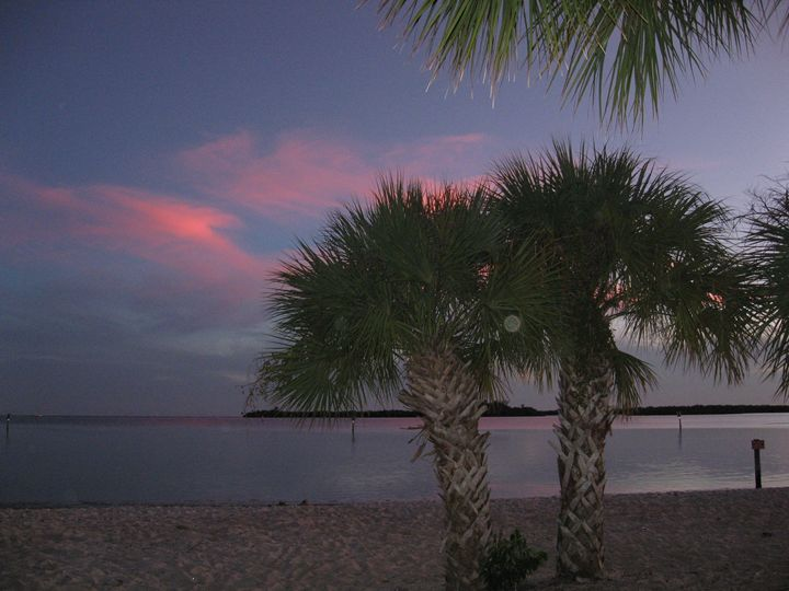 Palms At Sunset - My Evil Twin