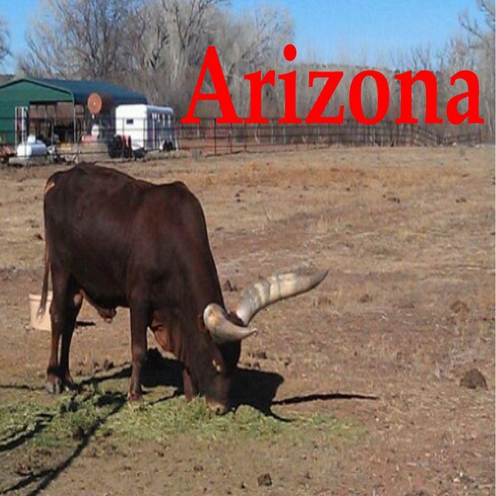 Arizona- Bull - My Evil Twin