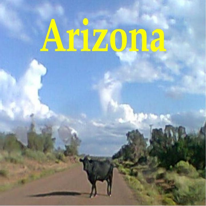 Arizona- Cow In The Road - My Evil Twin