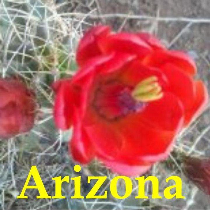 Arizona- Desert Flower - My Evil Twin