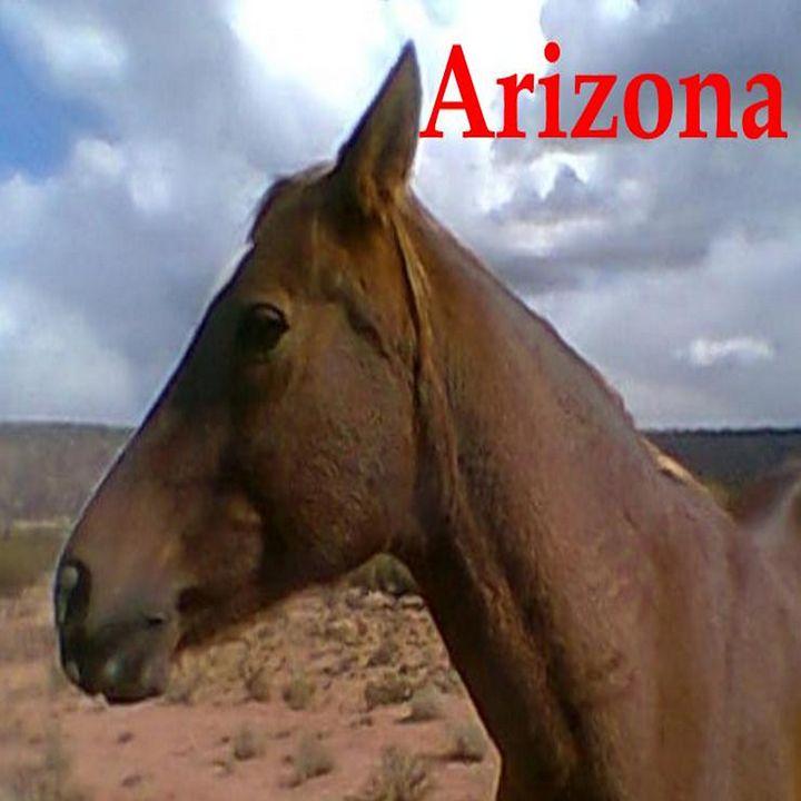 Arizona- Horse - My Evil Twin