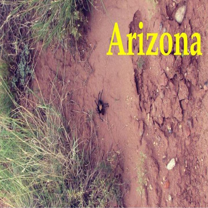 Arizona-Tarantula - My Evil Twin