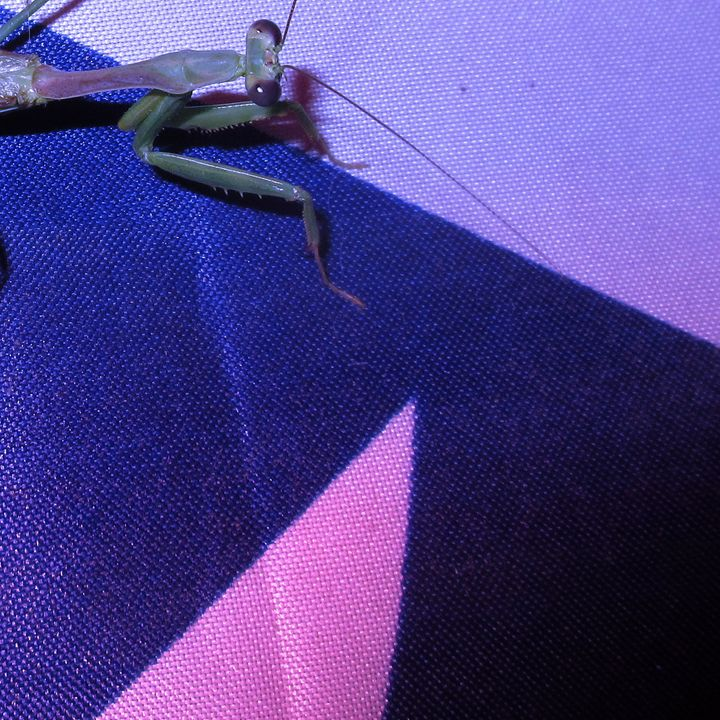 A Praying Mantis #8 - My Evil Twin