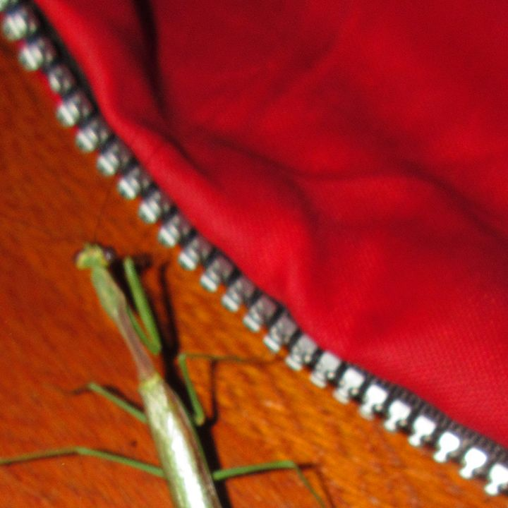 A Praying Mantis #4 - My Evil Twin