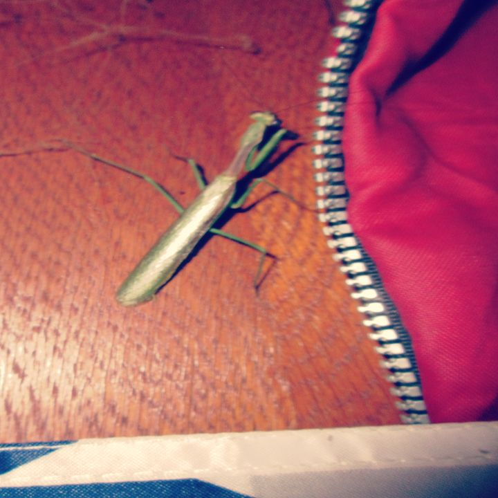 A Praying Mantis #3 - My Evil Twin