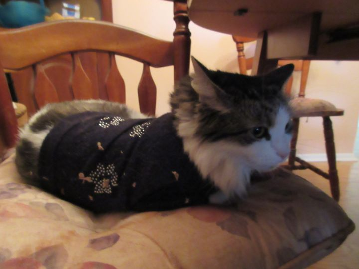 Retired Cat - My Evil Twin