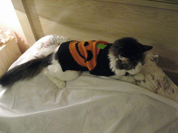 I Turned Into A Pumpkin At Midnight! - My Evil Twin