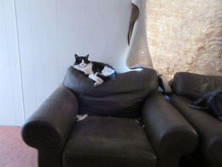 Reclining Figaro - My Evil Twin