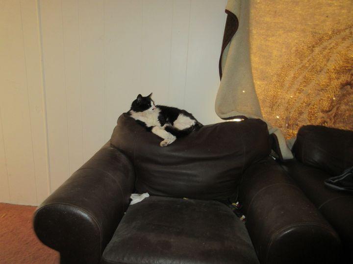 Lounging Figaro - My Evil Twin