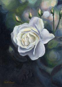 Rose in the morning light - Camille Barnes Studio