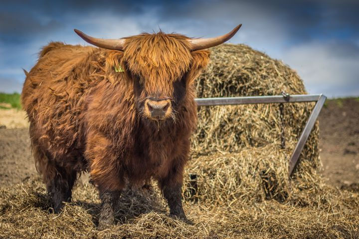 The Scottish Highland - James Kenworthy Photography