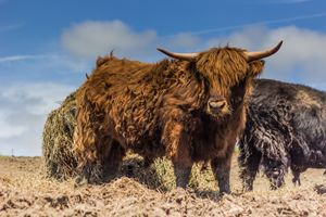 The Scottish Highland
