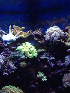 Coral Reef - Delirium