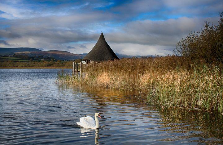 Swan at Llangorse - Jaydee's
