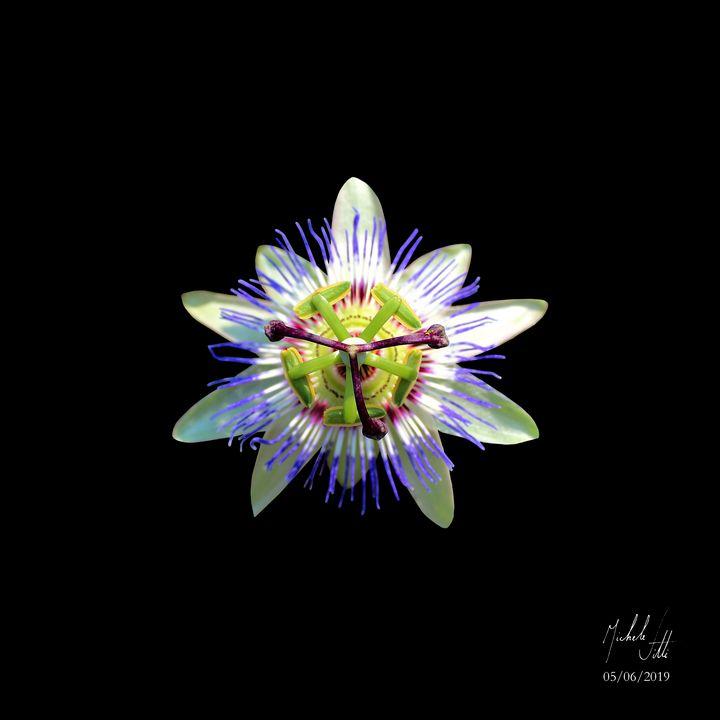 Flower - Michele Vitti