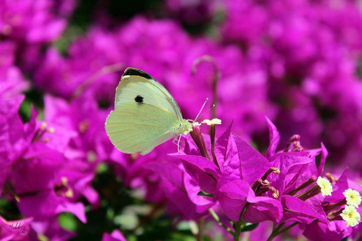Butterfly - Michele Vitti