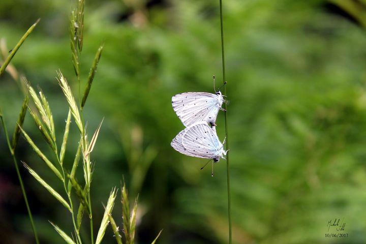 Butterflies - Michele Vitti