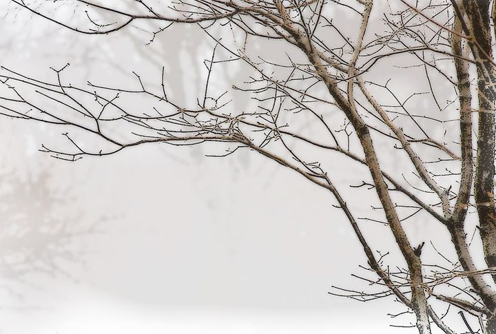 Tree In Fog - Sabra Image Prints