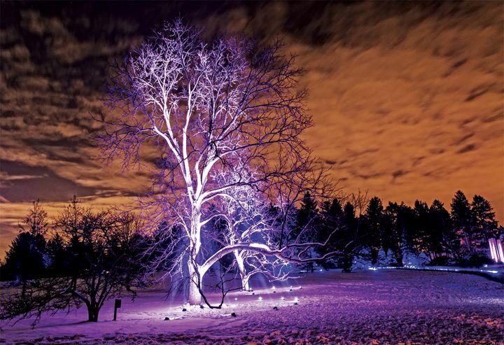 Purple Tree/Orange Skies - Sabra Image Prints