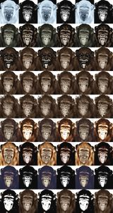 colors monkeys