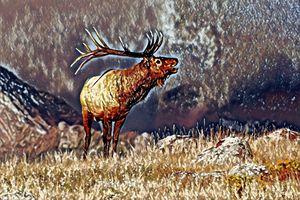 A majestic Elk in Colorado
