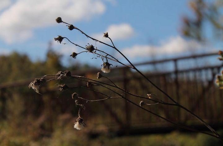 Cotton - Darko Art & Design/Photography