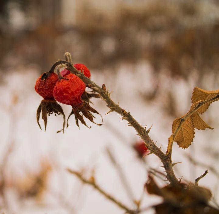 Thorns & Berries - Darko Art & Design/Photography