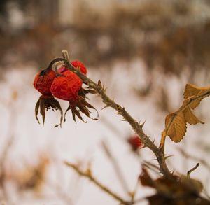 Thorns & Berries
