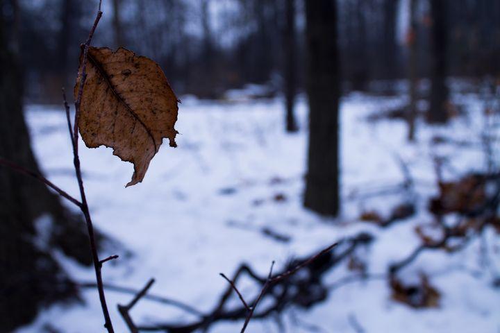 Lone Leave - Darko Art & Design/Photography