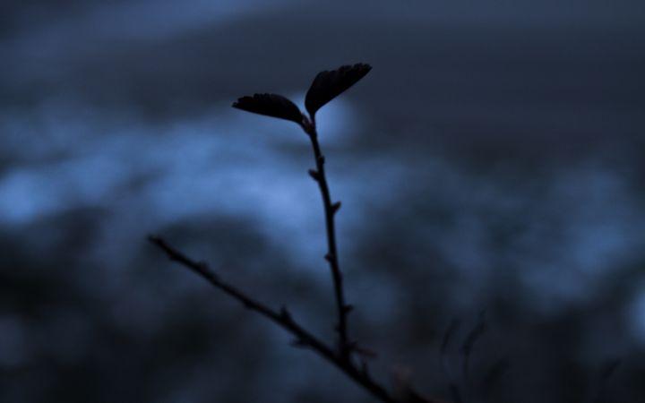 Leaf in Darkness - Darko Art & Design/Photography