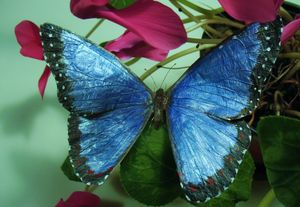 Butterfly Art - Hoagland Animal Art