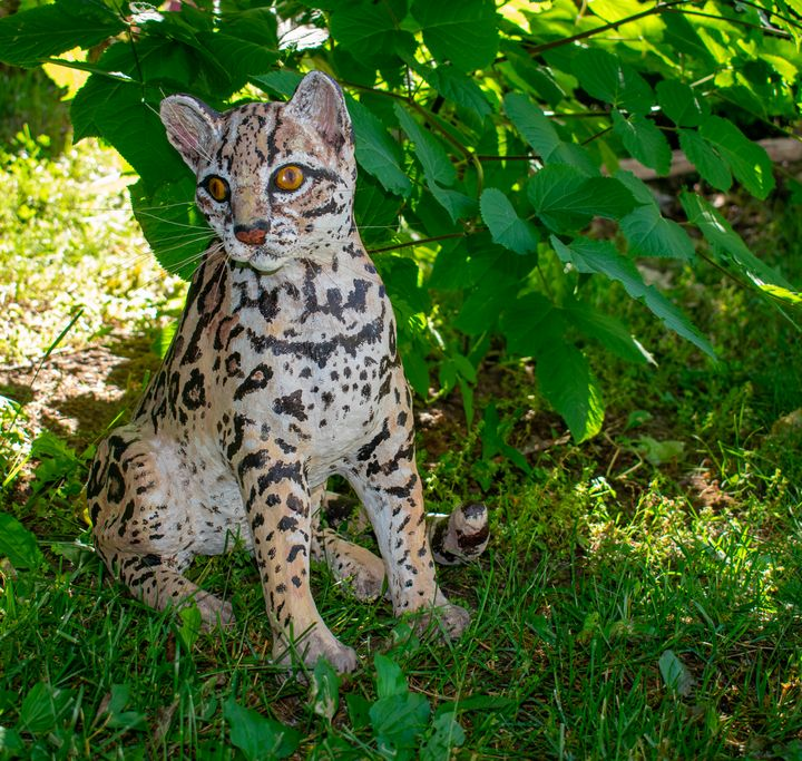 The Margay: South American wild cat - Hoagland Animal Art