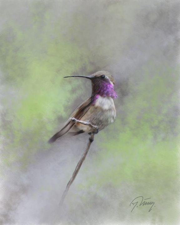 Hummingbirds - Jovica Petrovic Art