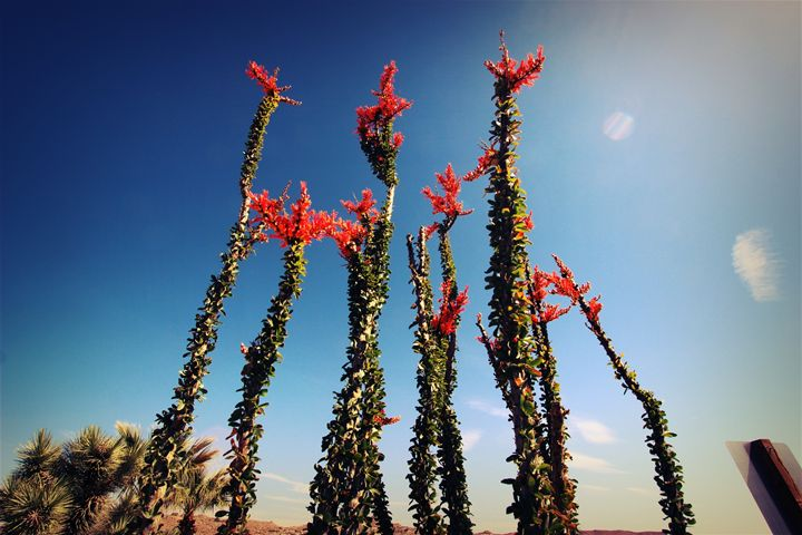 Yucca valley - Jlow Art
