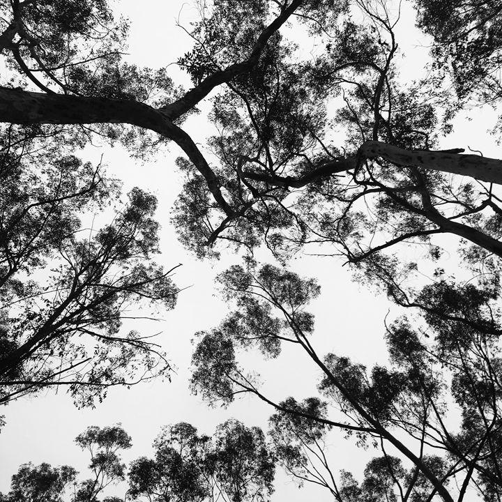 Trees - Jlow Art