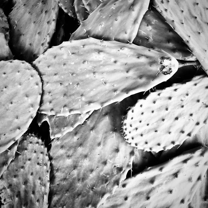 Cacti - Jlow Art