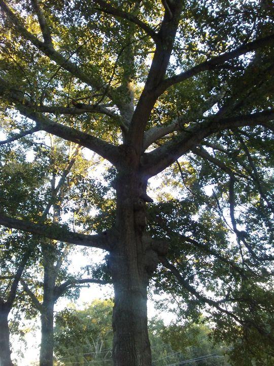 Strong Tree - Jay Makario