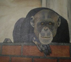 Original painting of chimpanzee