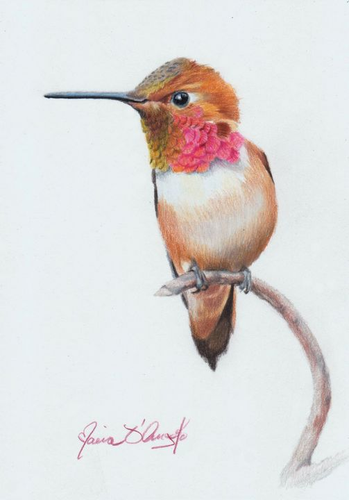 Rufous Hummingbird - Maria D'Angelo - Fine Art