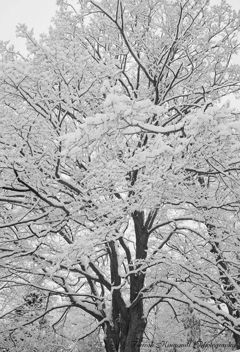 Winter Wonderland - Tarrah Kingsmill Photography
