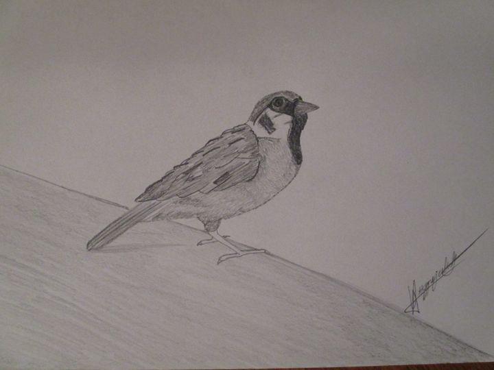 Sparrow - Oliver